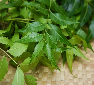 Ayurvedic diet for diabetes neem